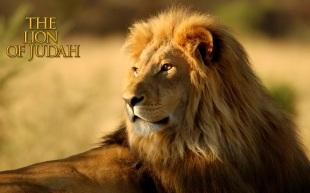 lion2bof2bjudah