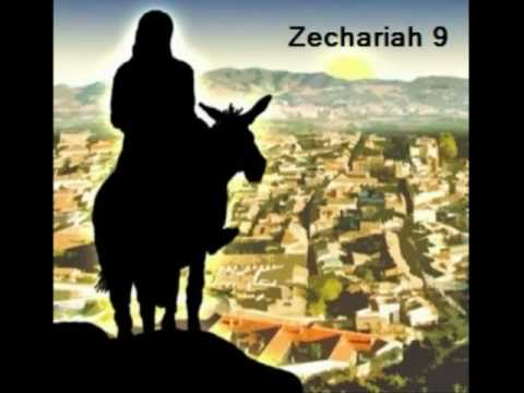 Zechariah 9 Donkey The Coming King of Zio...